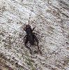 View full size photo of Field Cricket in Upper Hammonds Plains, Nova Scotia, Canada