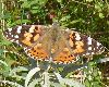 View full size photo of Painted Lady in Waverly, Nova Scotia, Canada