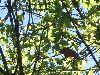 View full size photo of Cardinal in Markham, Ontario, Canada