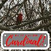 View full size photo of Cardinal in Bedford, NS, Canada